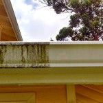 Maui Gutter Cleaning